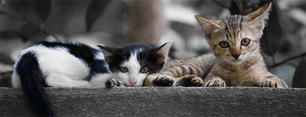kitten header แต่งภาพแบบดูดสี (Selective Color) แบบง่ายๆ ด้วย Tintii